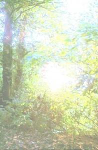 boscocontroluce